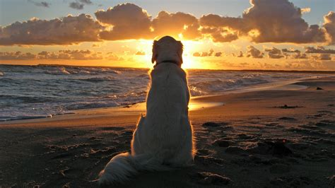 animals waves sand clouds dog sunset beach