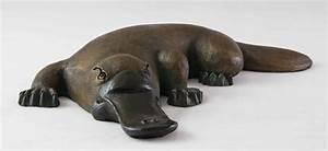 Platypus | The Biggest Animals Kingdom