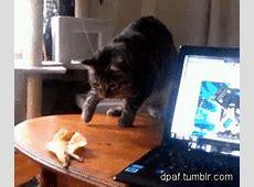 gato cazando La Loca de los Gatos