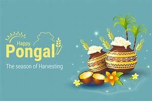 Happy Pongal Festival 2021 All About Pongal And Its