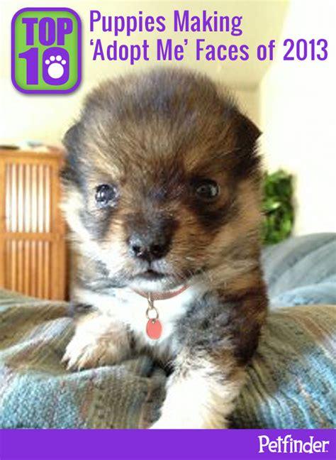 top 10 puppies adopt me faces of 2013 petfinder