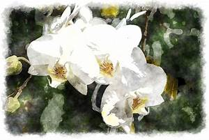 gaeroladid: White Orchid Painting Images