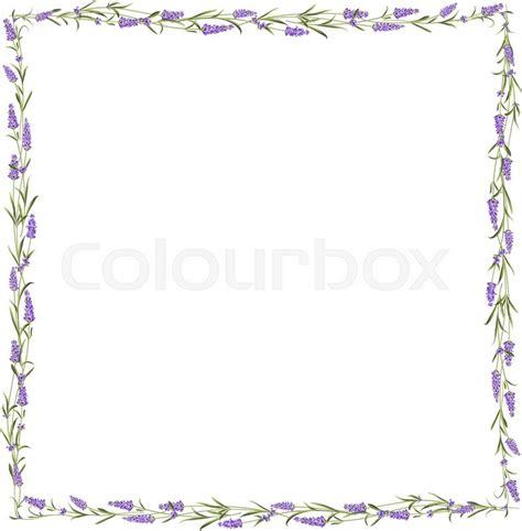 the lavender frame line bunch of lavender flowers on a white background vector illustration