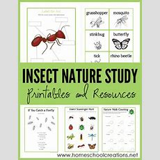 Insect Nature Study Printables  Learning About Bugs