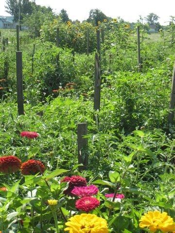 flowers add and diversity to the vegetable garden