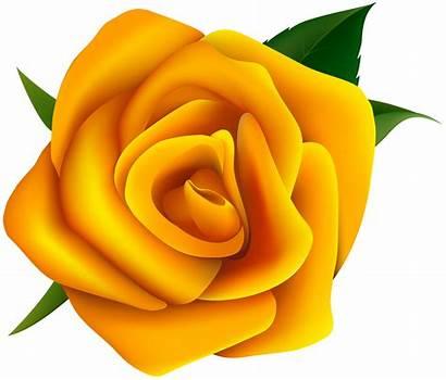 Yellow Clipart Rose Flower Clip Orange Clipground