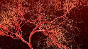 Blood Vessel Formation Has Implications For Cancer And