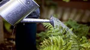 Pflanzen Bewässern Urlaub : so bew ssern sich deine pflanzen w hrend der urlaub wer weiss ~ Frokenaadalensverden.com Haus und Dekorationen