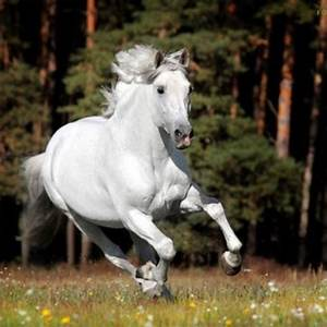 68 best images about Galloping Horses on Pinterest | The ...