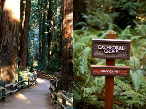 muir woods with 573 | muir woods cathedral grove e1404343558440