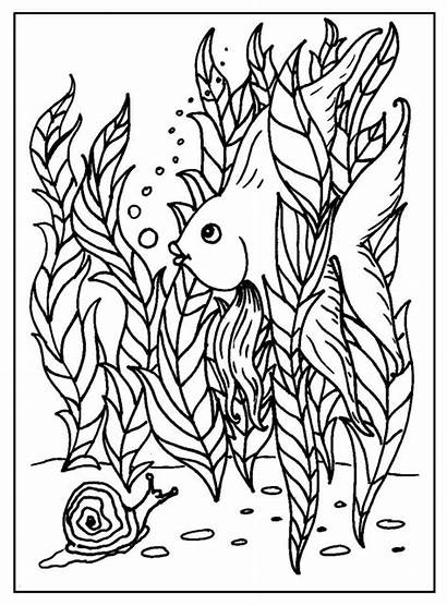Fish Coloring Pages Intermediate Funny Fancy Colouring