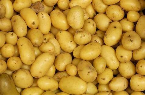 comment cuisiner la pomme de terre riz pâtes et pommes de terre comment remplacer le sel