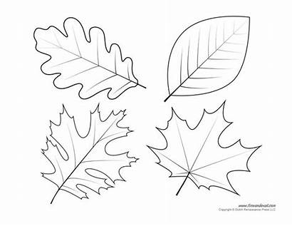 Leaf Template Templates Printable Coloring Pages Printables