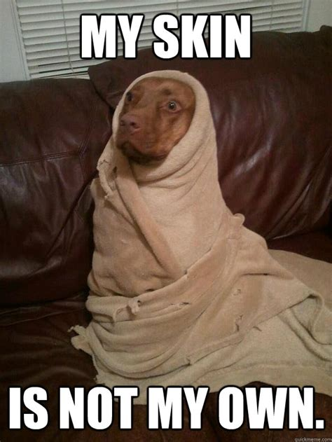 Dune Memes - dog emperor of dune dune know your meme