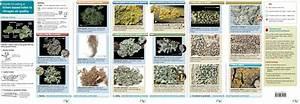 Monitoring Air Quality Using Lichens