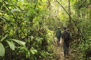 Image result for jungles of peru