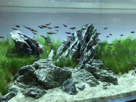 Japanese Aquascape Artist by The Of Aquascaping Fishkeeper