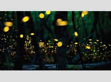 When Will The Fireflies Light Up Your Back Yard? Farmers