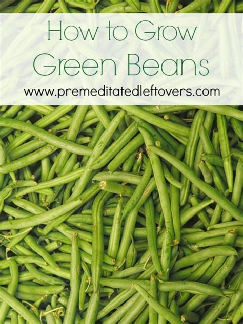 how does it take to steam green beans how to grow green beans