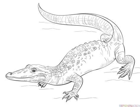 draw  realistic alligator step  step drawing