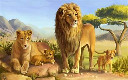 Lion Animals Wallpapers13 Resolution