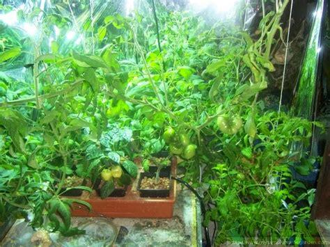 tanaman hias manfaat menggunakan pupuk organik cair