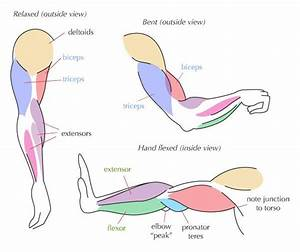 17 Best Images About Muscle Arm On Pinterest