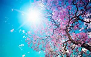 Spring Wallpapers HD download free | PixelsTalk.Net  Desktop