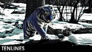10 Rarest Animals On Earth That May Be Extinct Soon