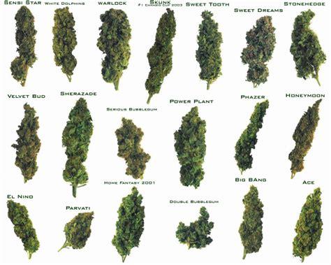 Medical Marijuana Corporate Control Vs Compassionate Use