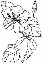 Coloring Hibiscus Printable Flower Flowers Sheets Colouring Bestcoloringpagesforkids sketch template