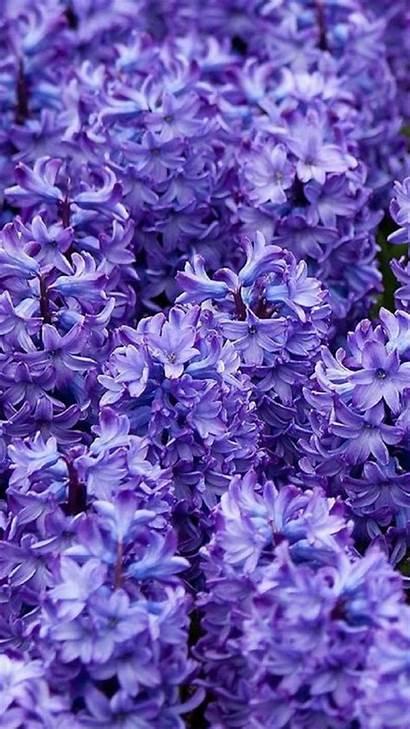 Iphone Flower Backgrounds Wallpapers Purple Background Desktop