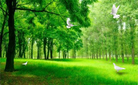 3d Green Nature Wallpaper by 3d Background Images Nature