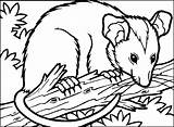 Opossum Coloring Possum Pages Clipart Coloriage Popular Library Clip sketch template