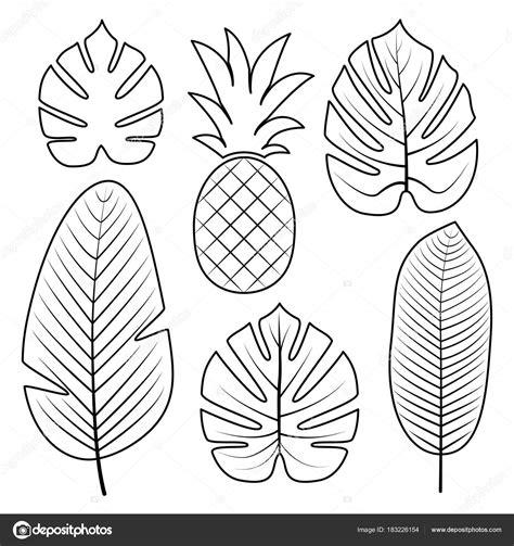 collection de feuilles tropicales illustration