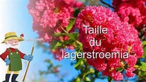 Taille Du Lilas Des Indes : la taille du lagerstroemia ou lilas des indes youtube ~ Nature-et-papiers.com Idées de Décoration