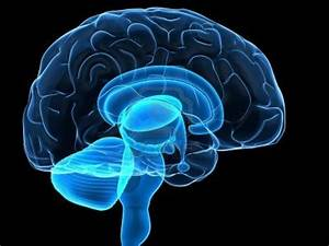 The Human Brain Project: Science From Fiction » Krypton Radio