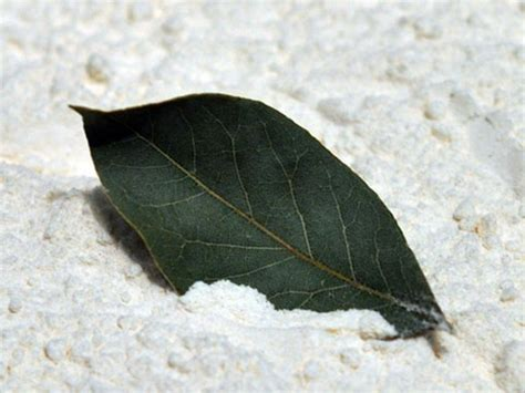 prevent  rid  pantry moths home places