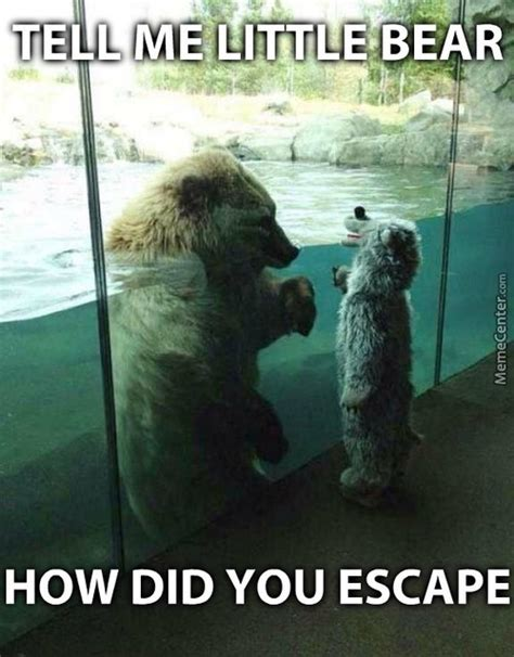 Bear Meme - little bear memes best collection of funny little bear pictures