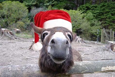 animals  santa hats  pics izismilecom