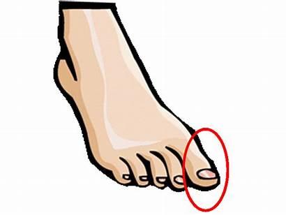 Parts Esl Toe Vocabulary Toes Foot Leg