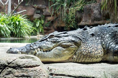 sydney wild zoo