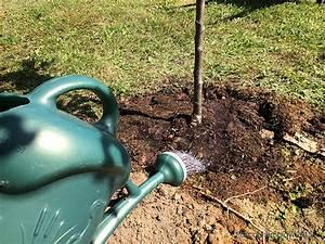 Quand Planter Un Pommier : tapes de plantation d 39 un pommier conseils pour planter ~ Dallasstarsshop.com Idées de Décoration