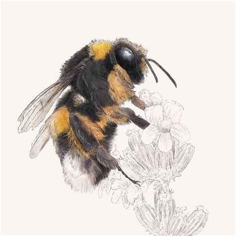 Bumblebee Print By Ben Rothery Illustrator