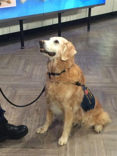 good karma photo vote     rescue work dog
