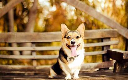 Dog Cool Wallpapers Dogs Backgrounds Bench Breed