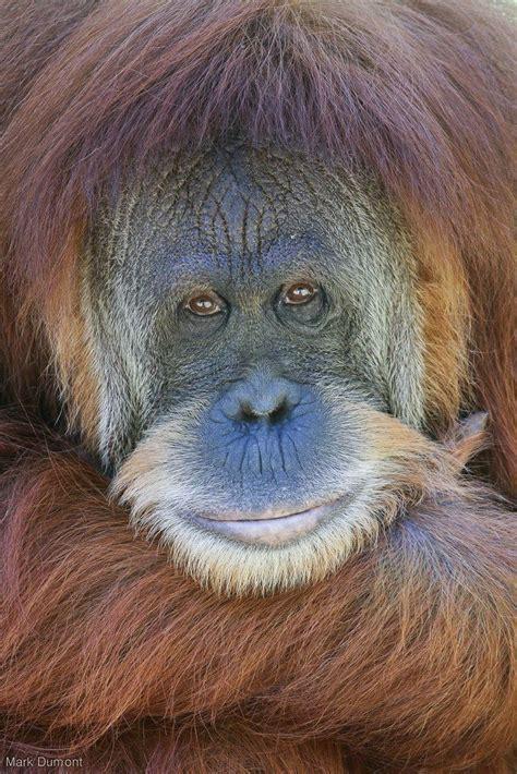 2 primates animales ex 243 tico y re 237 r