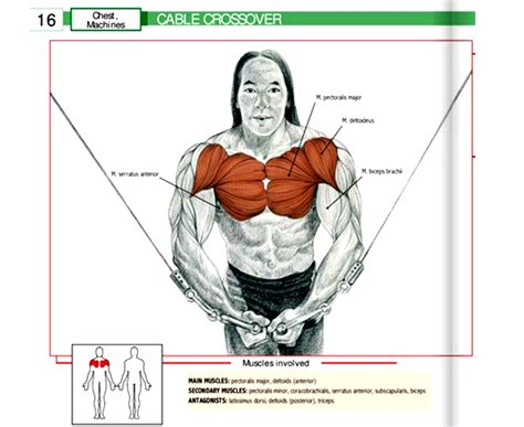 What areas / muscles does a treadmill work? Cable-and-Pulley-Crossover-Muscles-Worked-Workout ...