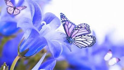 Butterfly Butterflies Flowers Flower Pretty Nature Backgrounds