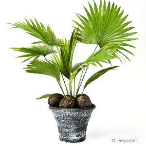 plante de bureau feng shui 28 images top 10 plante feng shui de interior casa și grădina